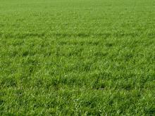 zdj. grasslandfarms.pl